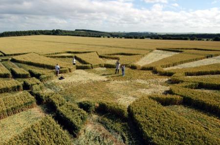 fenomena crop circle